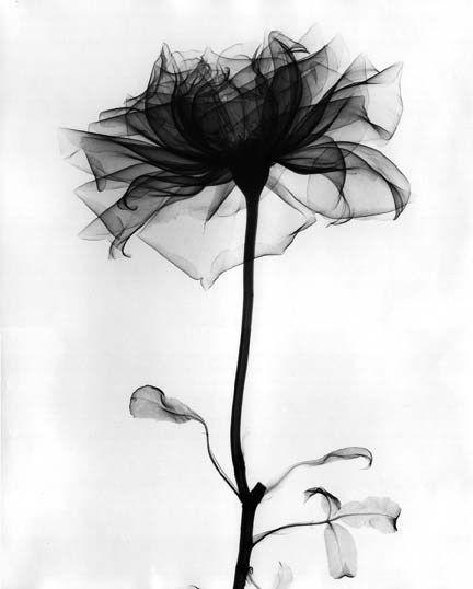 image en noir et blanc - Page 12